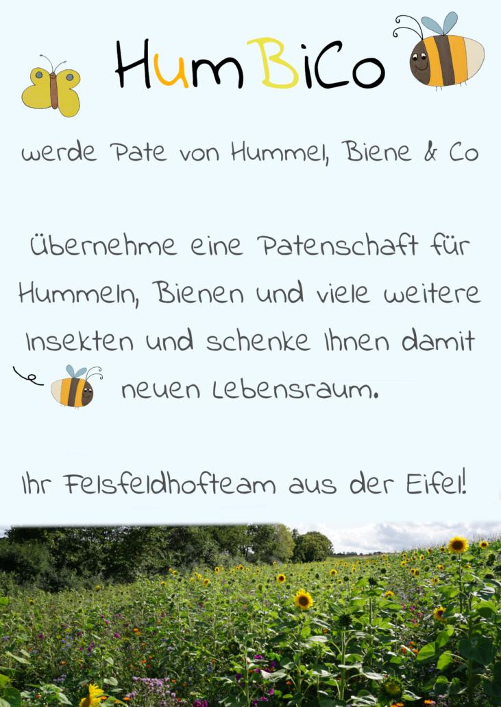 HumbiCo Blühwiese Felsfeldhof Kall